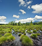 Peat bog  landscape - the national park Sumava Eur Royalty Free Stock Images