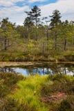 Peat bog. Landscape peat bog in summer royalty free stock image