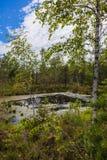 Peat bog. Landscape peat bog in summer stock photo