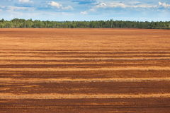 Peat bog Royalty Free Stock Images