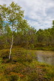 Peat bog. Landscape peat bog in summer stock photo