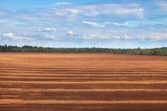 Peat bog. Landscape peat bog in summer stock photos