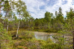 Peat bog Stock Photography