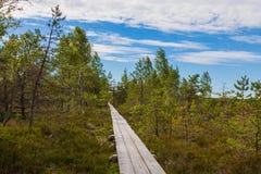 Peat bog. Landscape peat bog in summer stock images