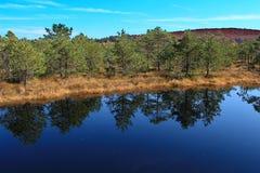 Autumn landscape - Peat bog, Mohos - Romania   Stock Image