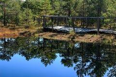 Autumn landscape - Peat bog, Mohos - Transylvania, Romania Stock Photography