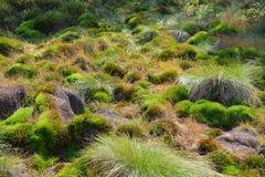Peat bog moss in Poland. Bieszczady National Park stock photos