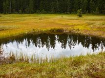 Peat bog in Romania Stock Photos