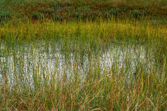 Peat bog in Romania Royalty Free Stock Photo