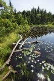 Peat bog near the summit of Mt. Sunapee, New Hampshire. stock photography