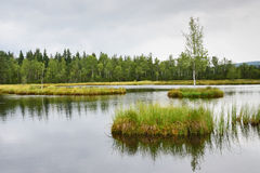 Peat bog Royalty Free Stock Photography