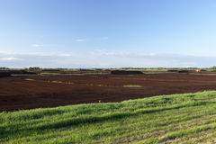 Peat bog, summer Stock Photography
