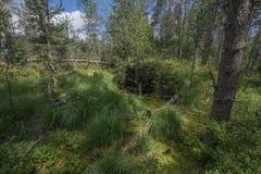 Peat bogs - National Nature Reserve - Cervene blato,Trebonsko Stock Image
