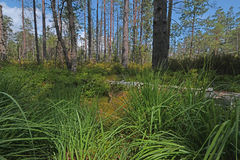 Peat bogs - National Nature Reserve - Cervene blato,Trebonsko Stock Photos