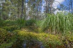 Peat bogs - National Nature Reserve - Cervene blato,Trebonsko Stock Photo