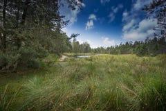 Peat bogs - National Nature Reserve - Cervene blato,Trebonsko Stock Images