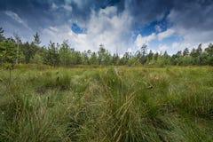 Peat bogs - National Nature Reserve - Cervene blato,Trebonsko Royalty Free Stock Photos
