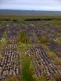 Peat Harvesting. Near Easkey, Co.Sligo, Ireland Royalty Free Stock Photos