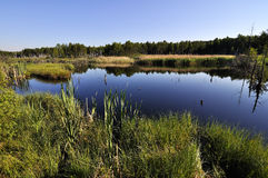 Peat lake Stock Image