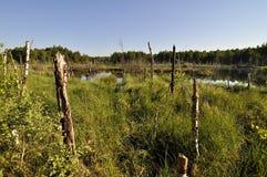 Peat lake Stock Images
