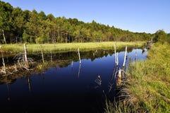 Peat lake Royalty Free Stock Photo