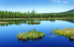 Peat lake - morass in reservation Stock Images