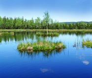 Peat lake - morass in reservation Royalty Free Stock Photography