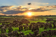 Peat on a meadow near Wiesmoor royalty free stock photo
