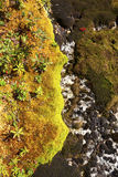 Peat moss and arctic alpine plants, Mt. Cardigan, New Hampshire. Stock Photography