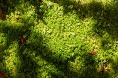 Peat Moss Stock Photos