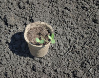 Peat pot Royalty Free Stock Images
