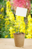 Peat pot with paper nameplate in the garden Stock Photo