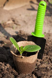 The peat pot with young plants on the ground Stock Photo