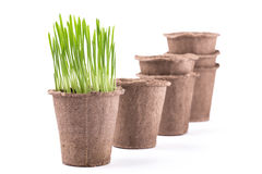 Peat pots isolated on white background Royalty Free Stock Photo