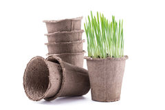 Peat pots isolated on white background Stock Photos
