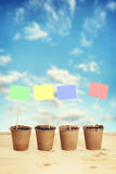 Peat pots with paper nameplates on sticks against blue sky Stock Image