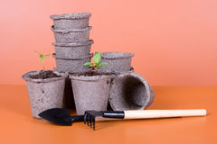 Peat pots, seedlings and garden tools Royalty Free Stock Photography