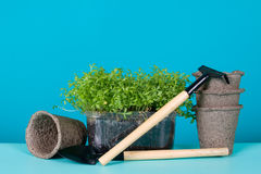 Peat pots and watercress Royalty Free Stock Images