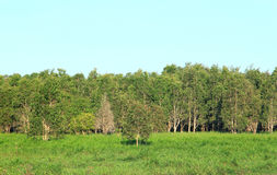 Peat swamp forest Stock Photography
