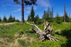 Peatbog в гигантских горах Стоковые Фотографии RF