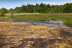 Peatland and fens Stock Photo