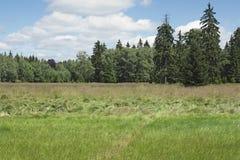 Peats di Kladska Fotografia Stock