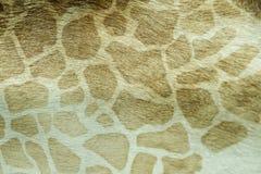 peau Photo stock