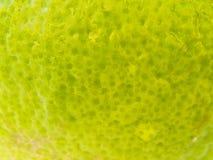 Peau claire de bergamote Image stock