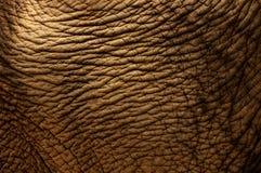 Peau d'éléphant Photo libre de droits