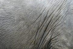 Peau d'éléphants Images stock