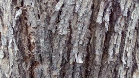 Peau d'arbre Photos libres de droits
