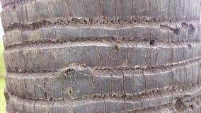 Peau d'arbre Image libre de droits