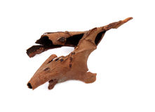 Peau d'arbre de goyave Photo stock