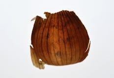 Peau d'oignon Photographie stock